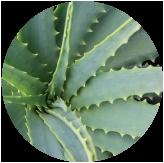 16種類の植物エキス